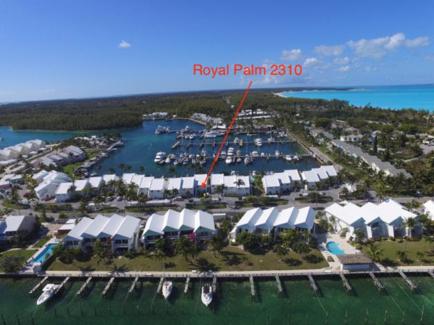 Royal Palm 231